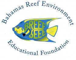 Bahamas Reef Environment Educational Foundation (BREEF)